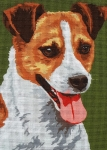 JACK RUSSELL TERRIER (6284)