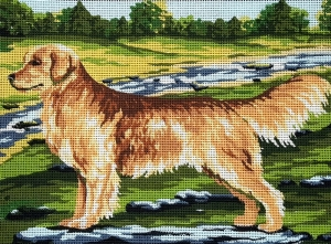 KANWA - GOLDEN RETRIEVER (6279)